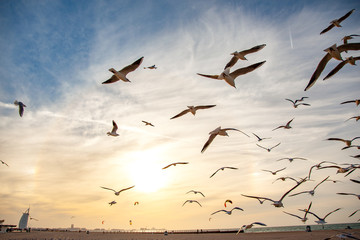 Many gulls flying on the sky