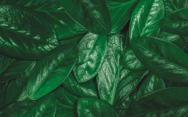 Texture of green leaf. Background texture creative layout of leaves concept.