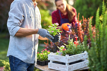 Guy gardener in garden gloves puts the pots with seedlings in the white wooden box on the table and a girl prunes plants in the wonderful nursery-garden on a sunny day. Fototapete