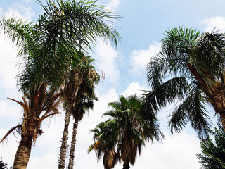 Palm trees and a blue Cloudy sky