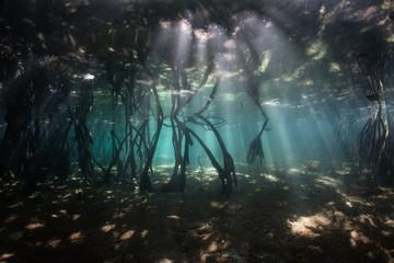 Sunlight and Shadows in Blue Water Mangrove, Raja Ampat