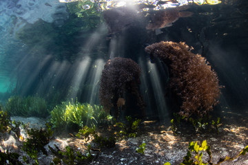 Shadows and Beams of Sunlight in Mangrove Forest, Raja Ampat