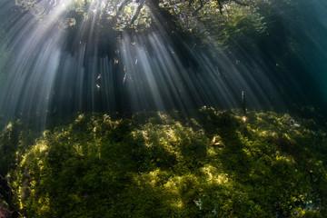 Beams of Sunlight and Blue Water Mangrove in Raja Ampat