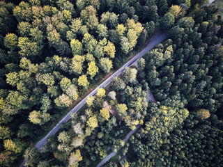 aerial veiw of empty road in green autumn dark forest. drone shot from straight above