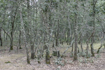 Burgos. Nature in forest with pines. Spain