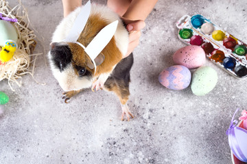 A guinea pig in a hand with Easter eggs. The guinea pig has a Easter .