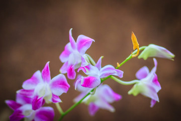 Beautiful purple dendrobium orchid flowers on the dark background, selective focus.