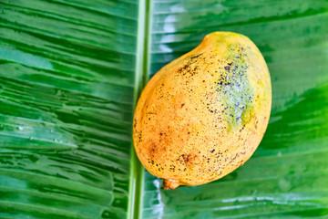 Ripe mango fruit on a green leaf. Close-up.