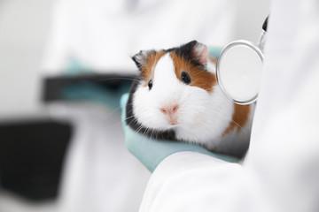 Cute hamster muzzle close up.