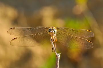 Macro shots, Beautiful nature scene dragonfly.