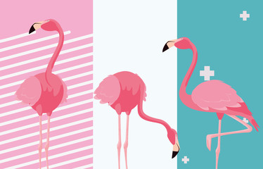 tropical flamingo design