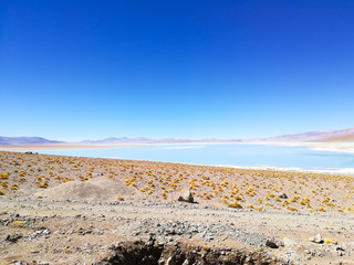 Bolivian lagoon view,Bolivia. Green water lake