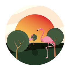 flamingo bird in the landscape