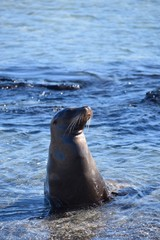 Sea lion posing in the water