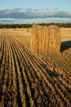 Hay Bales in Prince Edward Island, Canada.