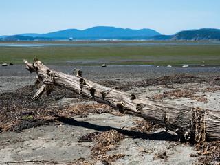 Low tide coastal scenery at Bay View State Park, WA, USA, with views across Padilla Bay to San Huan Islands