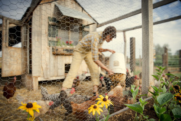 Young woman feeding chicken on farm