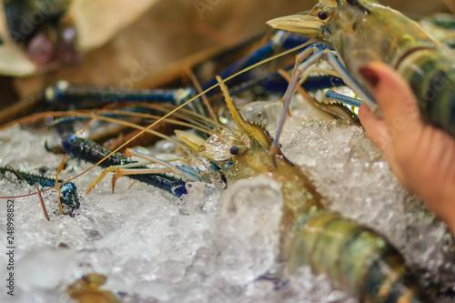Extra large size of giant malaysian prawn (Macrobrachium rosenbergii