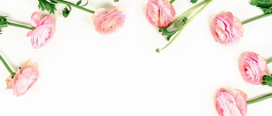 Flowers background banner. Pink flowers ranunkulus  on white background. Top view. Copy space.