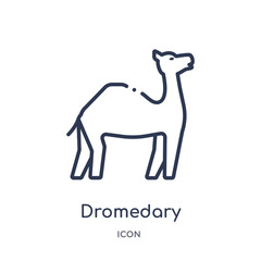 dromedary icon from religion outline collection. Thin line dromedary icon isolated on white background.