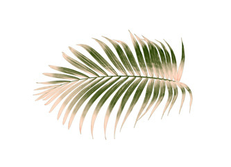 green palm leaf isolated on white for summer background Wall mural