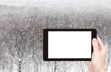 snowstorm over woods in winter