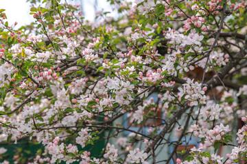Beautiful blooming flower in garden, summer background