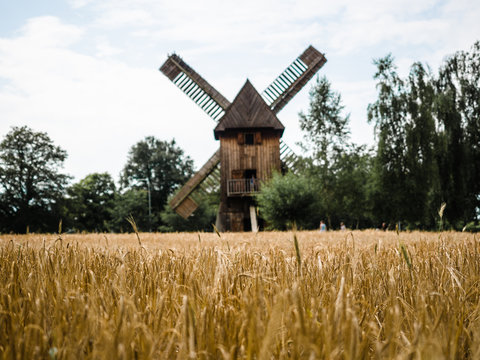 Blurred windmill on background and golden wheat rice field with trees.