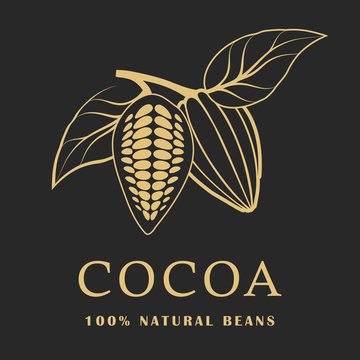 Cocoa beans with leaves on dark background. Cacao logo. Vector illustration.