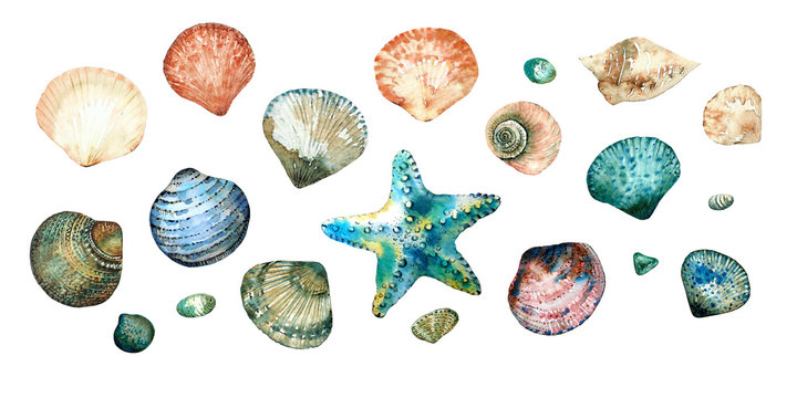 Collection of seashells in style doodle and abstract hand-painted with watercolors isolated on white background. Design elements.