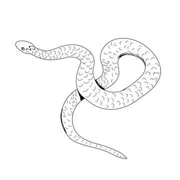 snake crawls, contour, design