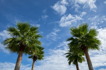 Palm trees and Blue sky with cloud
