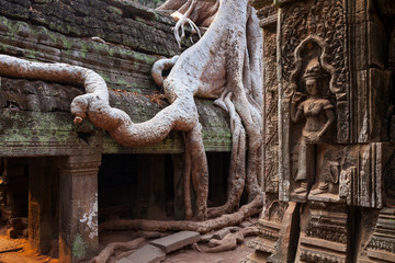 Ta Phrom Temple. Angkor. Siem Reap town, Siem Reap province. Cambodia, Asia
