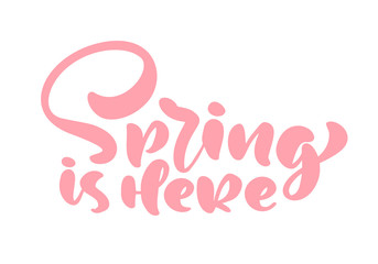 Pink Calligraphy lettering phrase Spring is Here. Vector Hand Drawn Isolated text. sketch doodle design for greeting card, scrapbook, print