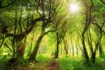 Beautiful green nature view of the UNESCO Laurissilva forest (Laurel forest) in the mountains of Madeira in summer
