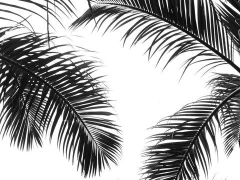 beautiful palms leaf on white background