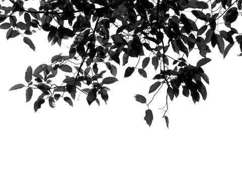 silhouette leaf tree