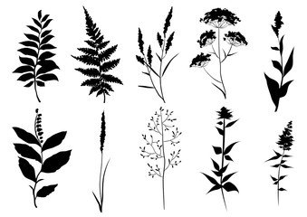 Hand drawn set of black silhouettes of wild set of black silhouettes of wild meadow herbs. Wildflowers. Wild grass. Vector illustration.