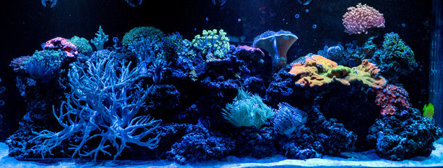 Wall Murals Coral reefs hard coral macro in aquarium