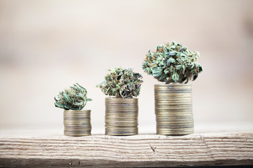Business concept medical cannabis . marijuana stack of coins rising
