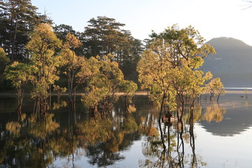 submerged trees with green fresh leaves reflecting on the lake and the boatman at sunrise of the spring