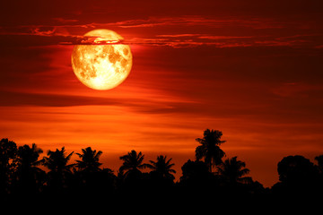 super blood snow moon back silhouette tree on dark red sky