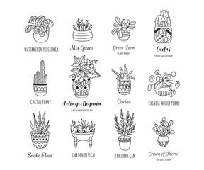 House plants hand drawn illustration set