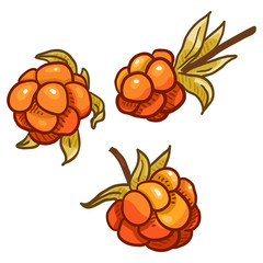Vector Set of Cartoon Cloudberry Illustration