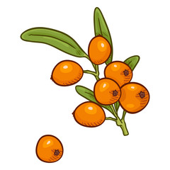 Vector Cartoon Sea Buckthorn Beriies on Branch