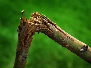 Broken Branch Tree Limb Green Break Splinters Sharp