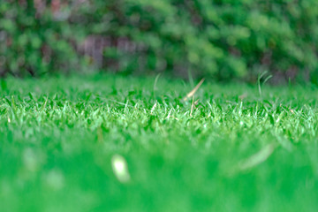 close up grass field in the garden with blur background.
