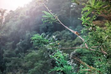 Beautiful view on Sri-lanka landscape. Chipmunk on a branch