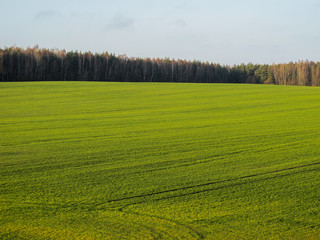 Wonderful green field and forest in the countryside on a sunny day