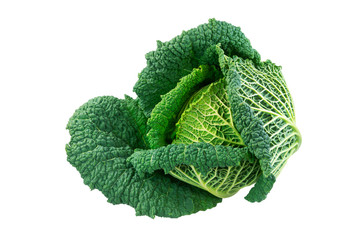 Isolated fresh savoy cabbage head